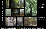 De l'arbre à la forêt.