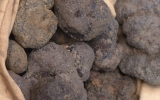 Truffes et autres plaisirs à Grignanais