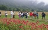Visite de notre exploitation de plantes aromatiques et médicinales bio