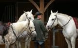 Balades à cheval en forêt de Brotonne