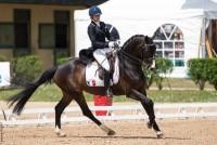 stage de Dressage à l'école d'équitation Kerdoen