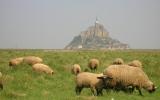 Randonnées pédestres à la découverte du bocage normand.