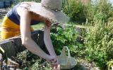 Visite commentée du Jardin des Simples de Baugnac