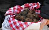 Week-end à la recherche des truffes au vignoble de gaillac