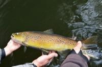 Journée pêche du Brochet et de la truite en bateau sur la Dordogne