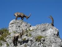Randonnées dans les massifs du Jura