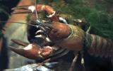 Un après-midi amusant pêche d'écrevisses & goûter dans le Sidobre (adultes & enfants >6 ans)
