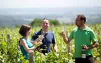 Atelier découverte du métier de vigneron