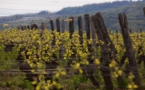 Visite du domaine viticole