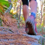 Trail nature en forêt de fontainebleau